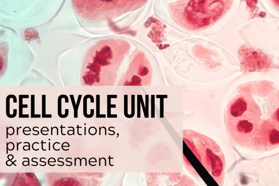 cell cycle unit