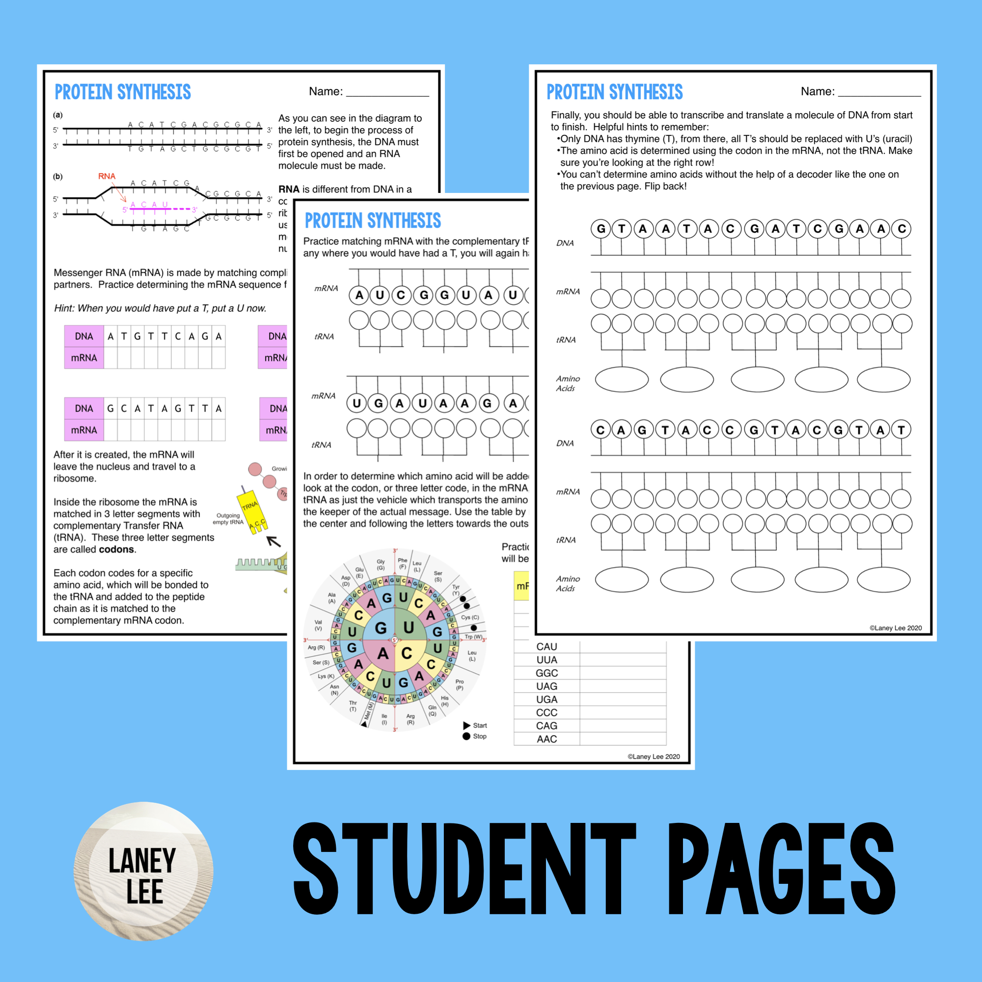 Protein Synthesis Guided Practice Worksheet - PDF ...