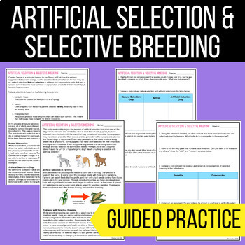 Artificial Selection & Selective Breeding - Guided Reading ...