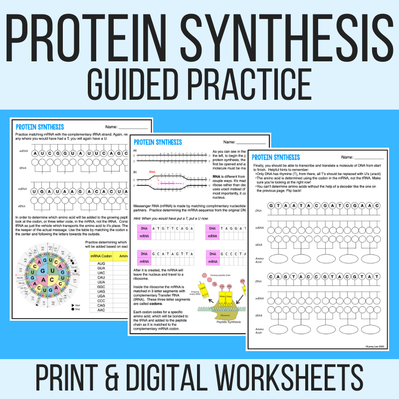 protein synthesis worksheet practice pdf answer key