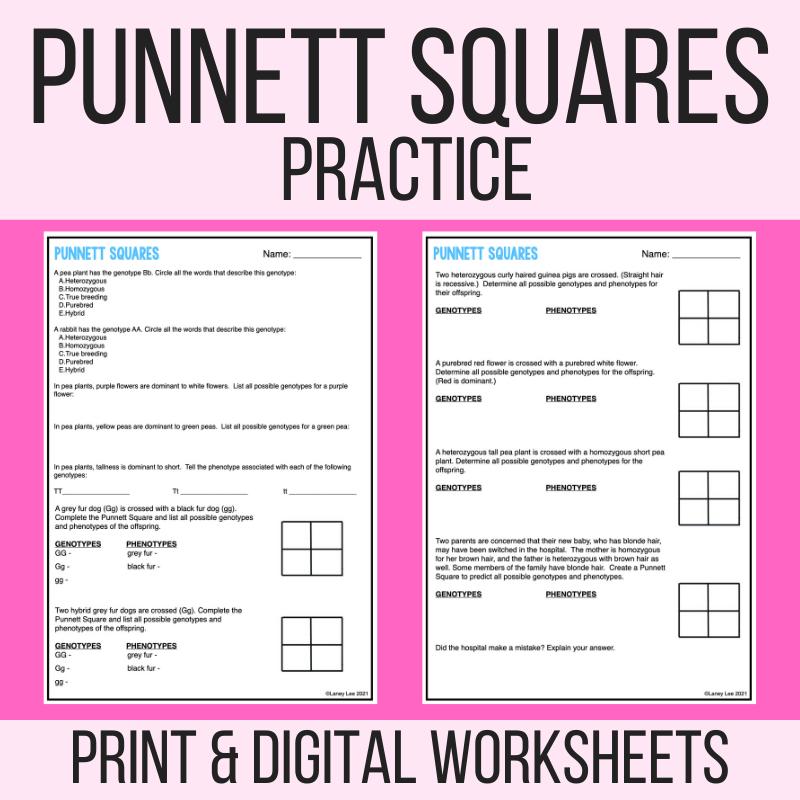 punnett square practice pdf answer key