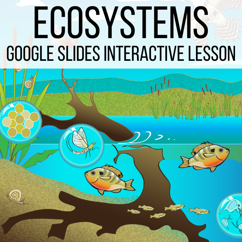 ecosystems lesson