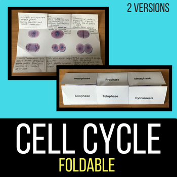 cell cycle mitosis foldable