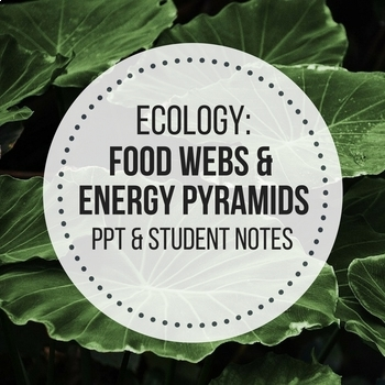 food webs presentation