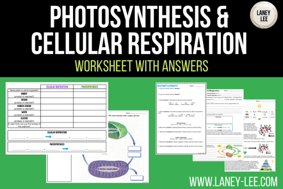 photosynthesis and cellular respiration worksheet answer key pdf