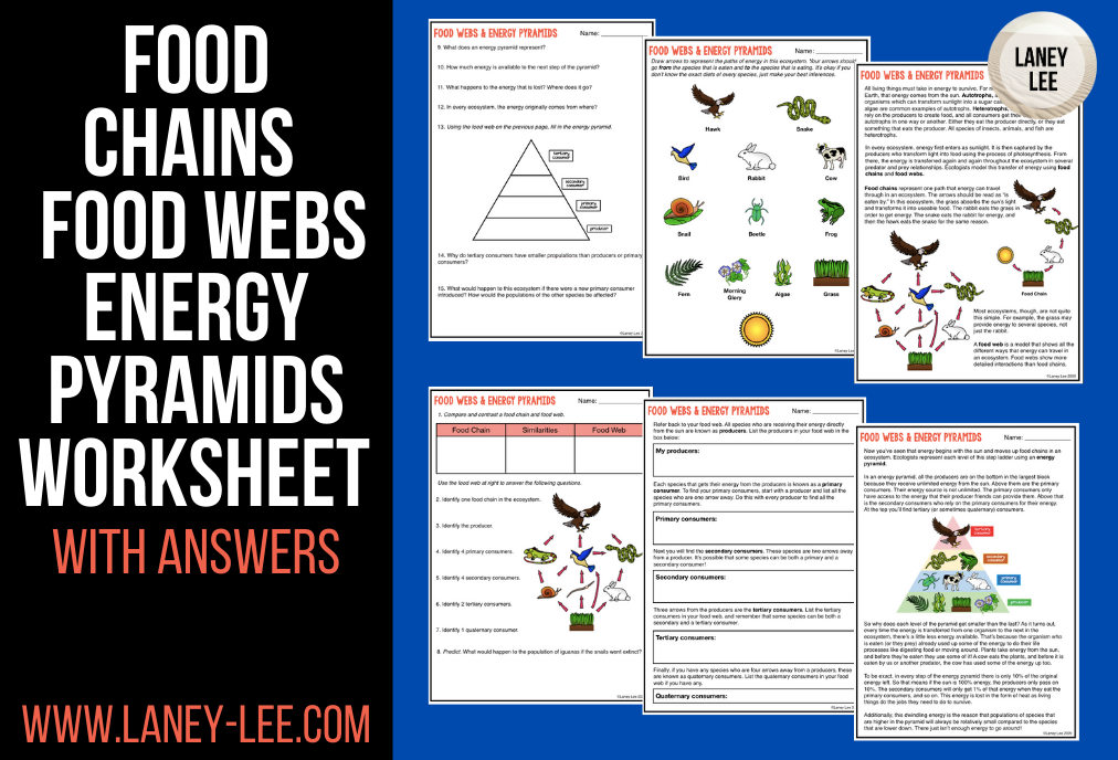 food chains and food webs worksheet answers