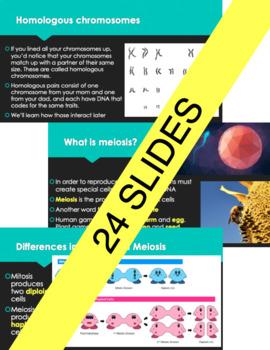 meiosis presentation