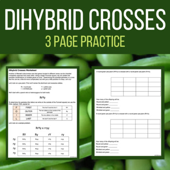 Dihybrid Cross Practice Worksheet with Answer Key - Laney Lee