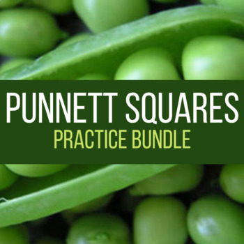 Punnett Square Practice with Answer Key - Laney Lee