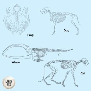 animal skeletons clipart