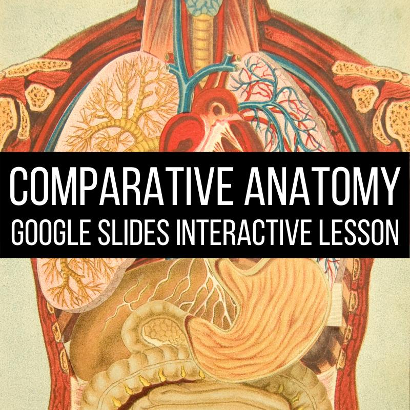 comparative anatomy lesson