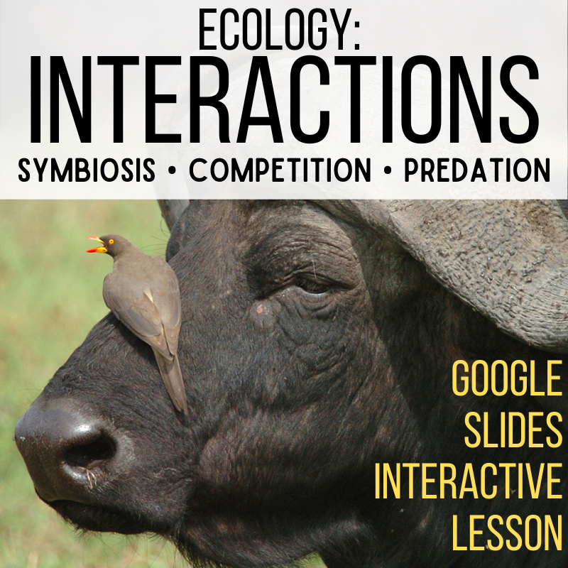 ecosystems interactions lesson