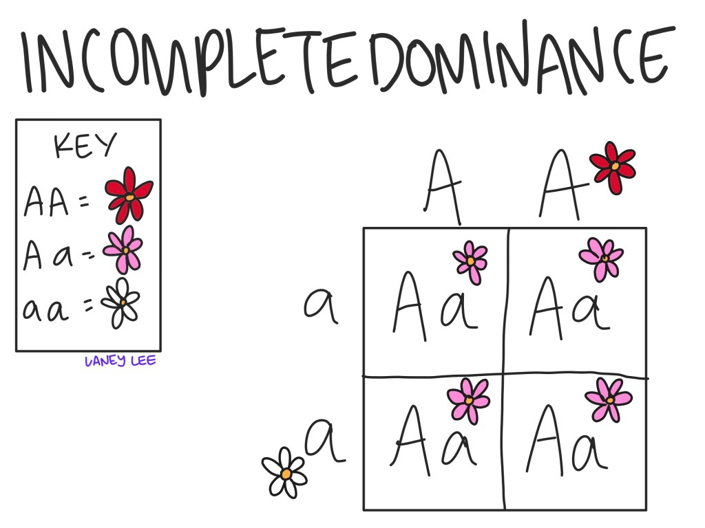 sample incomplete dominance problem example