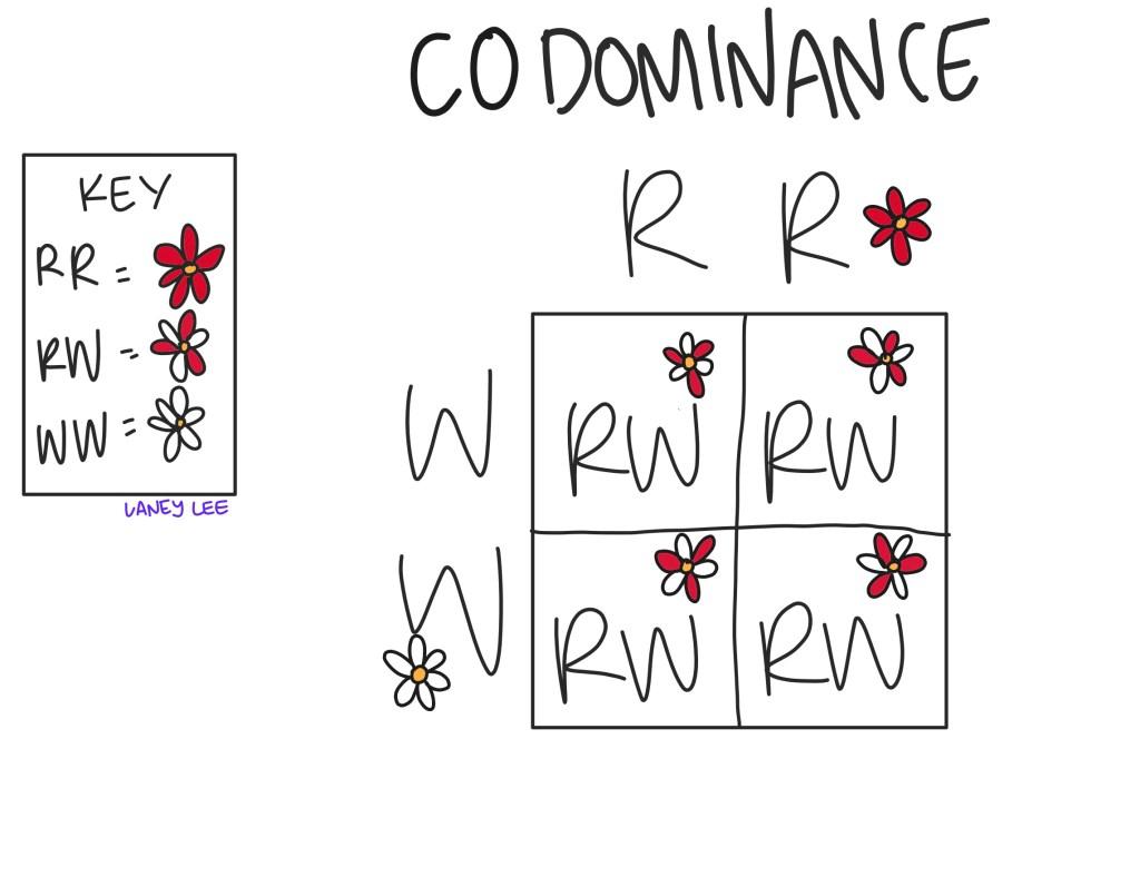 sample codominance problem example