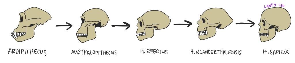 punctuated equilibrium vs gradualism human evolution
