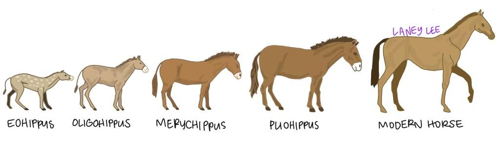evolution horse punctuated equilibrium vs gradualism
