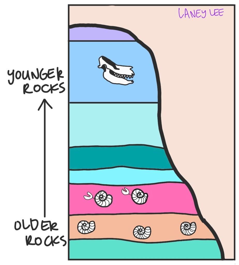 punctuated equilibrium vs gradualism rock layers evolution