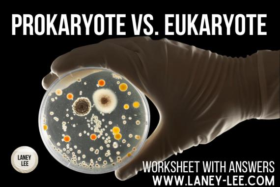 prokaryote vs. eukaryote worksheet
