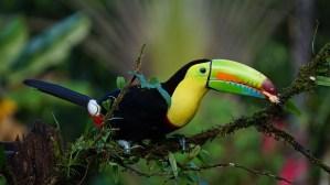 toucan bird beak adaptations