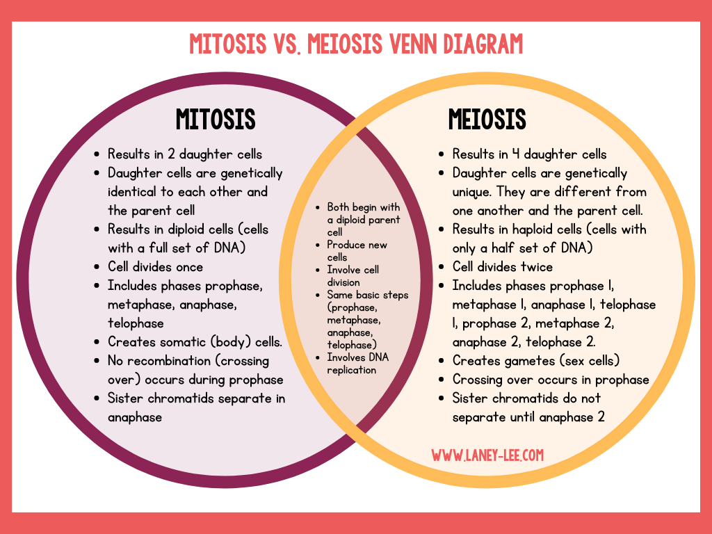 mitosis vs. meiosis venn diagram comparing mitosis and meiosis